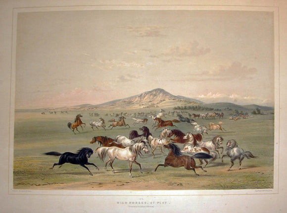 CATLIN, George (1796-1872). Plate No. 3. Wild Horses, at Play