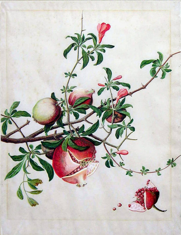 Chinese Export (late eighteenth-century), Pomegranate