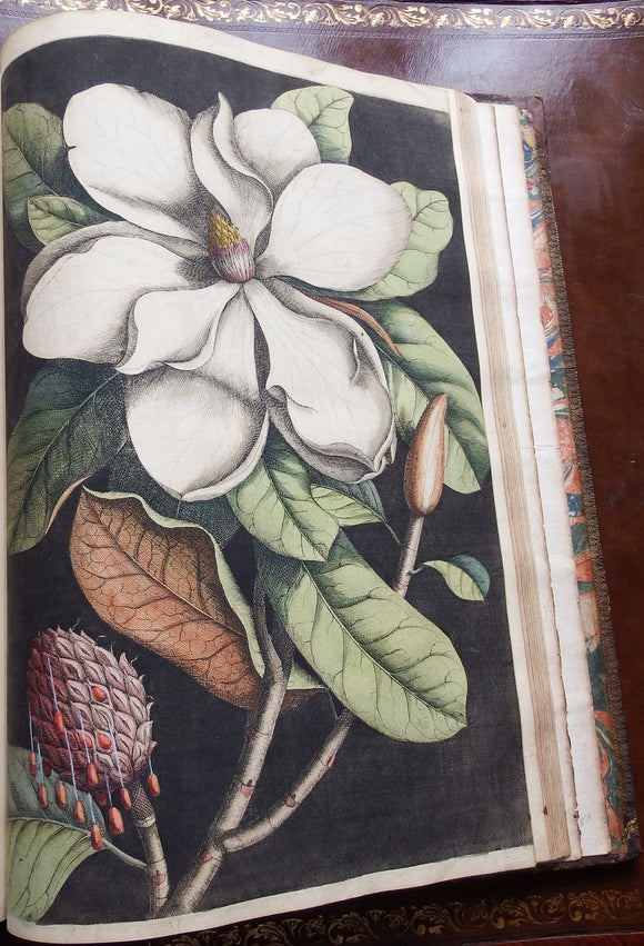 CATESBY, Mark (1683-1749). The Natural History of Carolina, Florida and the Bahama Islands,... London: W. Innys, R. Manby, Mr. Hauksbee and by the Author, 1731-1743.