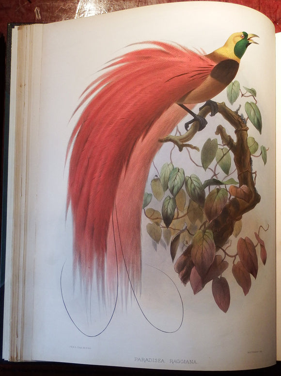ELLIOT, Daniel Giraud (1835-1915). A Monograph of the Paradiseidae, or Birds of Paradise. [London]: by the Author, 1873.