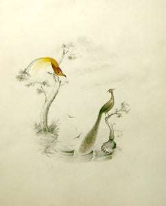 EDWARD LEAR (BRITISH, 1812-1888) Two Peacocks Watercolor on paper