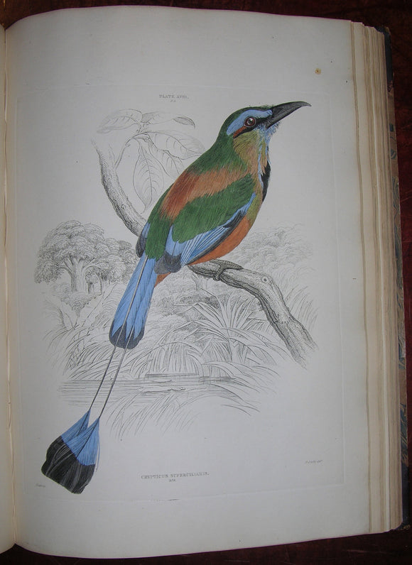 JARDINE, Sir William (1800-1874) - SELBY, Prideaux John (1788-1867). Illustrations of Ornithology. Edinburgh: W.H. Lizars; London: S. Highley; and Dublin: W. Curry, 1826.