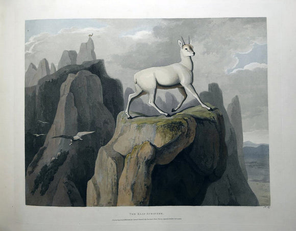 DANIELL, Samuel (1775-1811). PLATE No. 27, THE KLIP-SPRINGER
