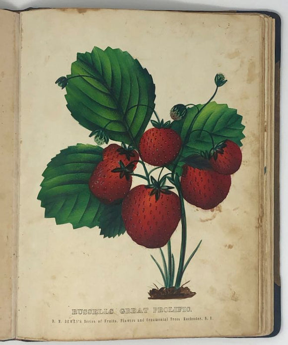 DEWEY, Dellon Marcus (1819–1889). The Colored Fruit Book: For Use of Nurserymen. Rochester, New York: D. M. Dewey, 1860.