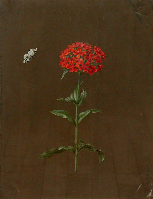 dietzsch-barbara-regina-1706-1763-butterfly-and-verbena-watercolor-with-gouache-and-gold-leaf-on-vellum-ca-2nd-and-3rd-quarters-18th-century
