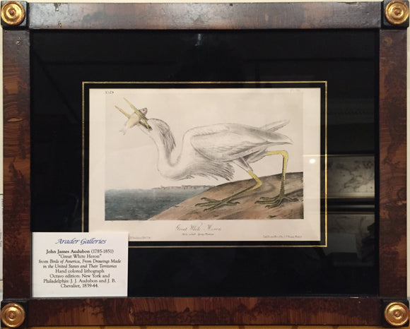 AUDUBON, John James (1785 - 1851). Plate 368, Great White Heron