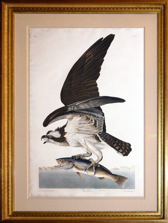 John James Audubon (1785-1851), Plate LXXXI Fish Hawk or Osprey