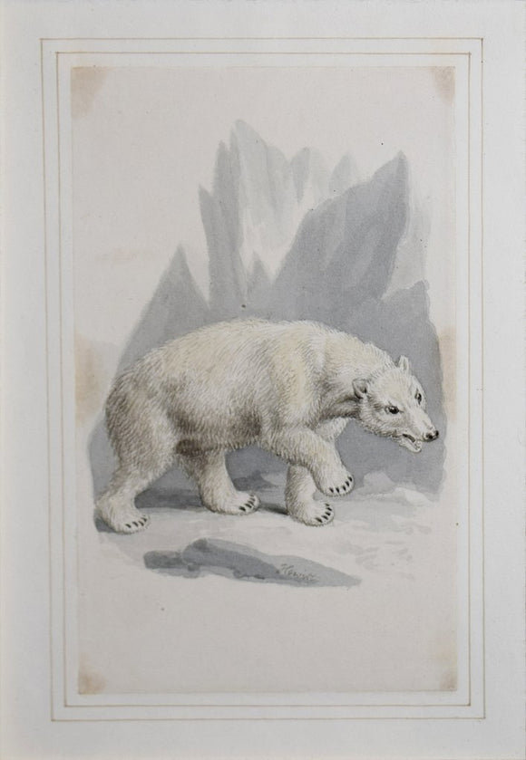 Samuel Howitt (British, 1765-1822)  Polar Bear