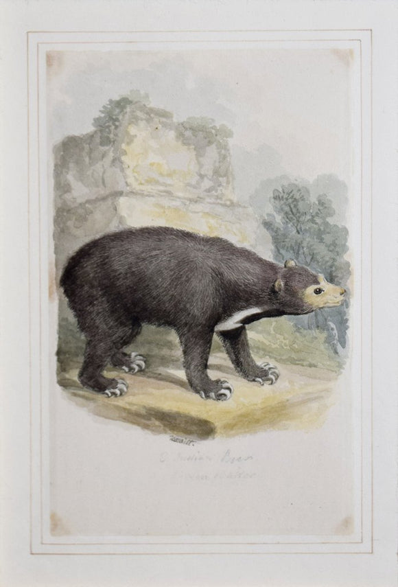 Samuel Howitt (British, 1765-1822), East Indian Bear