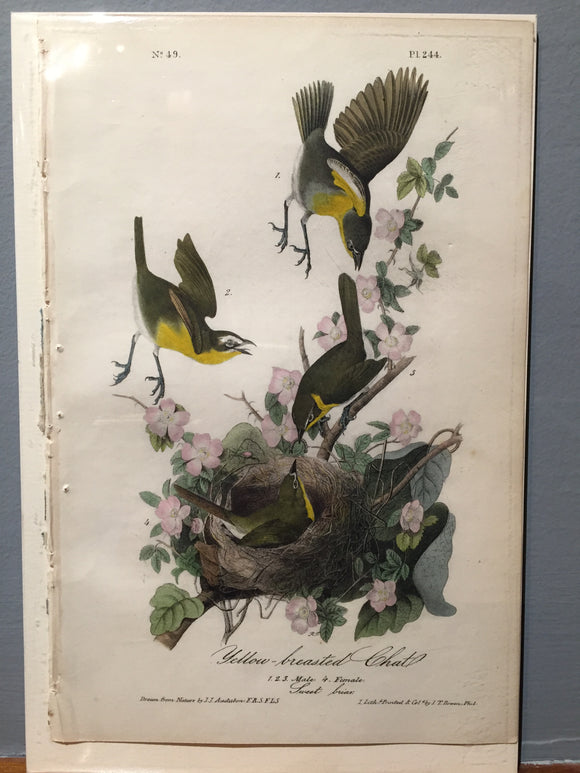 John James AUDUBON and William Hitchcock, Yellow-Breasted Chat (Plate 244), 1843-1844