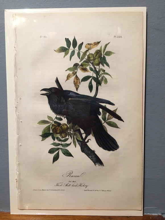 John James AUDUBON and William Hitchcock, Raven (Plate 224), 1843-1844