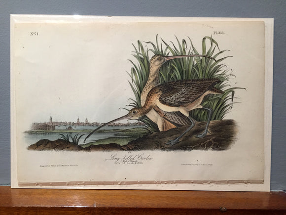John James AUDUBON and  William Hitchcock, Long-Billed Curlew (Plate 355), 1843-1844