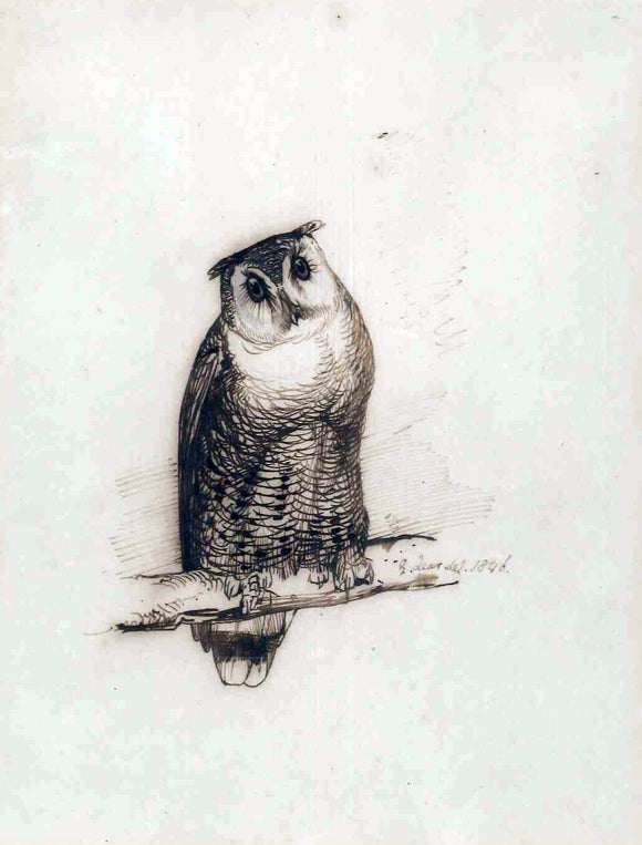 Edward Lear (1812-1888) Study of an Eagle Owl