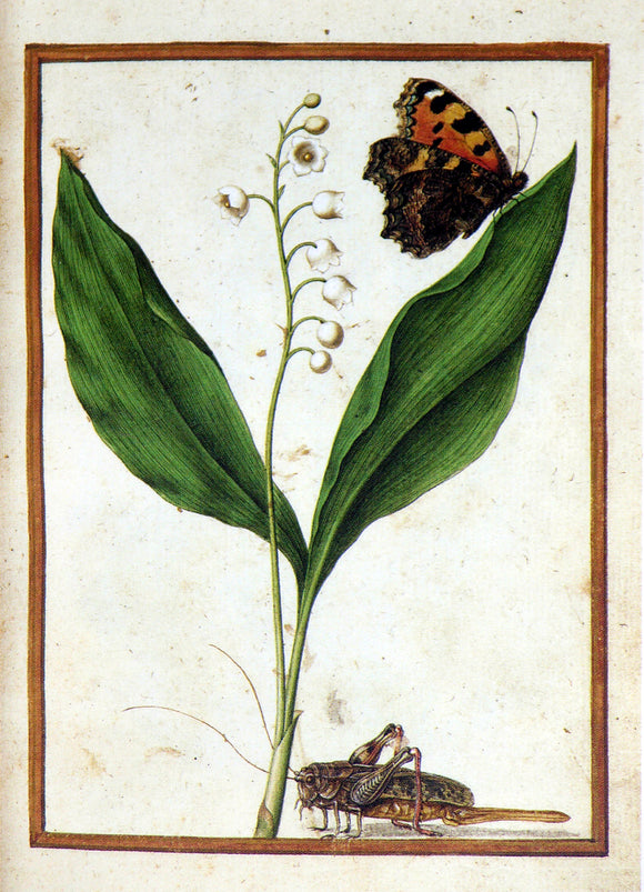 JACQUES LE MOYNE DE MORGUES (FRENCH, CA. 1533-1588) f.7: Lily of the Valley with butterfly and grasshopper Watercolor and gouache on paper prepared as vellum