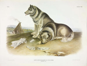 AUDUBON, John James (1785-1851) Vol. III, Plate 113, Esquimaux Dog