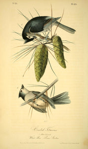 AUDUBON, John James (1785 - 1851). Plate 125, Crested Titmouse