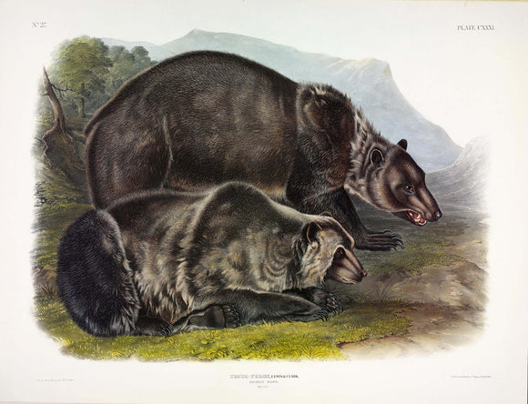 AUDUBON, John James (1785-1851) Vol. III, Plate 131, Grizzly Bear