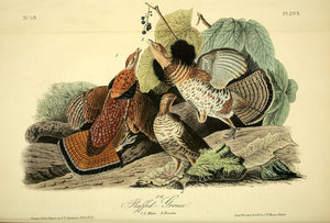 Plate 293, Ruffed Grouse