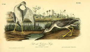 Plate 345, Tell-tale Godwit or Snipe