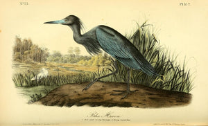372 AUDUBON, John James (1785 - 1851). Plate 372, Blue Heron
