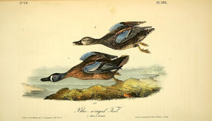 Plate 393, Blue-winged Teal