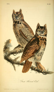 AUDUBON, John James (1785 - 1851). Plate 039, Great Horned Owl