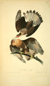 AUDUBON, John James (1785 - 1851). Plate 4, Caracara Eagle
