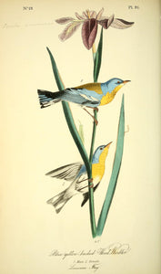 AUDUBON, John James (1785 - 1851). Plate 91, Blue Yellow-Backed Wood Warbler