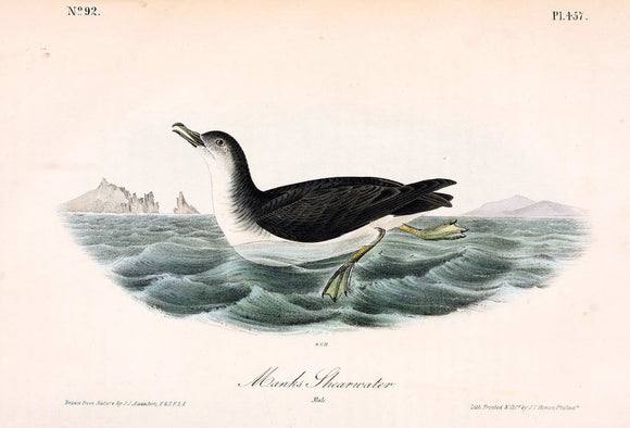 Plate 457, Manks Shearwater