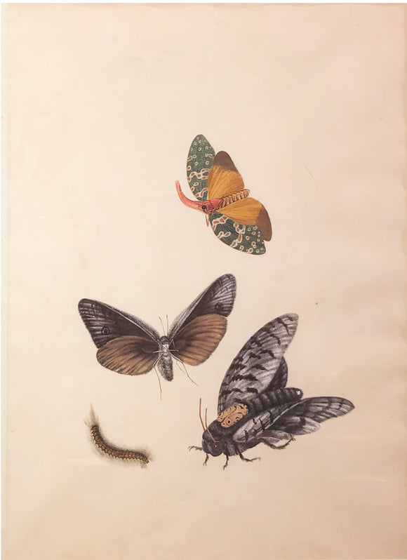 chinese-school-19th-century-three-butterflies-and-a-caterpillar-watercolor-and-gouache-on-paper