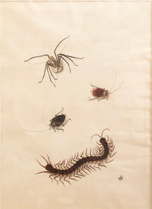 chinese-school-19th-century-spider-two-beetles-centipede-and-bee-watercolor-and-gouache-on-paper