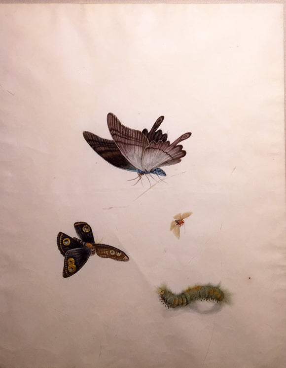 CHINESE SCHOOL (19TH CENTURY) [Three Butterflies and a Caterpillar] Watercolor and gouache on paper