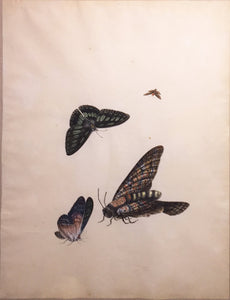 chinese-school-19th-century-four-butterflies-watercolor-and-gouache-on-paper