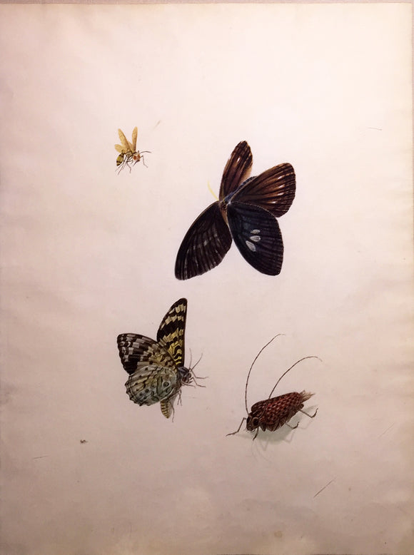 CHINESE SCHOOL (19TH CENTURY) [Two Butterflies, a Wasp, and a Beetle] Watercolor and gouache on paper