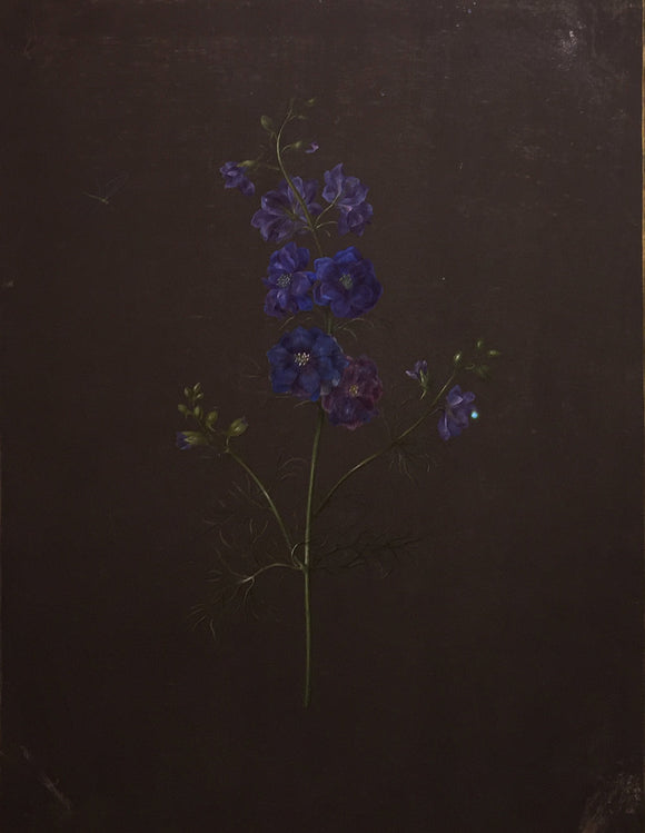 dietzsch-barbara-regina-delphinium-watercolor-with-gouache-and-gold-leaf-on-vellum