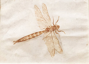 attributed-to-jacques-de-gheyn-ii-study-of-a-dragonfly