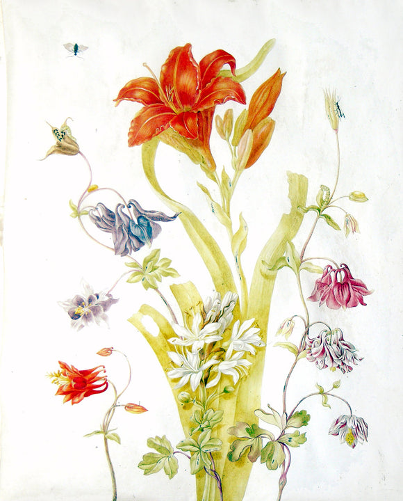 herolt-graff-johanna-helena-1668-1717-attributed-to-study-of-a-lily-columbines-and-other-flowers-ca-1702-1711