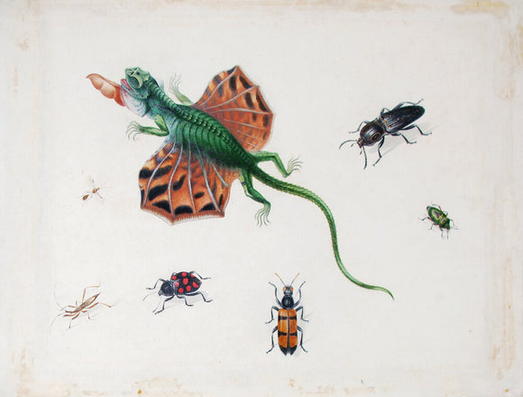 herman-henstenburgh-dutch-1667-1726-a-flying-lizard-surrounded-by-beetles-and-other-insects-watercolor-and-gouache-on-paper
