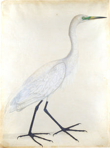 ATTRIBUTED TO GURU DAYAL (FL. 1804-07) Indian Egret (female)
