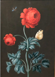 ernst-friedrich-carl-lang-german-1748-1782-red-ranunculus-with-postillion-and-flying-beetle-watercolor-and-gouache-on-vellum