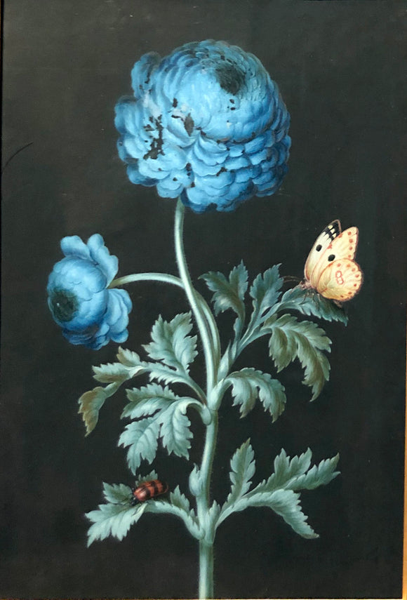 ernst-friedrich-carl-lang-german-1748-1782-blue-ranunculus-with-postillon-and-sitting-beetle-watercolor-and-gouache-on-vellum