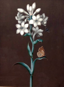ernst-friedrich-carl-lang-german-1748-1782-tuberose-polianthes-tuberosa-agave-polianthes-with-mother-of-pearl-and-fly-watercolor-and-gouache-on-vellum