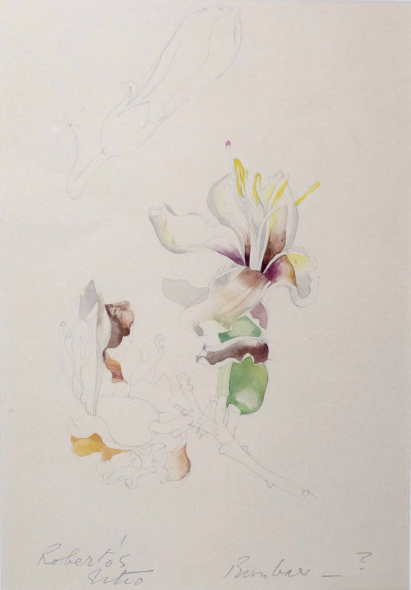 mee-margaret-1909-1988-original-gouache-and-watercolour-over-graphite-drawing-of-a-white-bombax-flower-santo-antonio-da-bica-sitio-in-campo-grande-rio-de-janeiro-after-1973