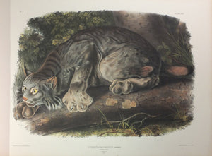 AUDUBON, John (1785-1851) and Rev. John BACHMAN (1790-1874). The Viviparous Quadrupeds of North America, New York: J.J. Audubon (V.G. Audubon), 1845-1848., 1848