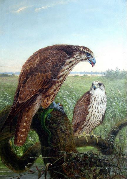 wolf-joseph-1820-1899-saker-falcons-oil-on-canvas-1864