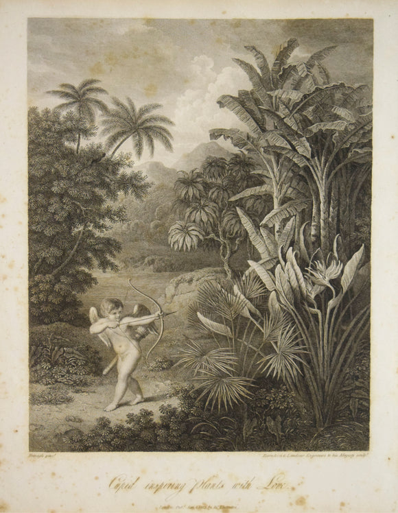 Robert John Thornton (1768-1837) Cupid Inspiring the Plants with Love  From The Temple of Flora (Quarto Edition)