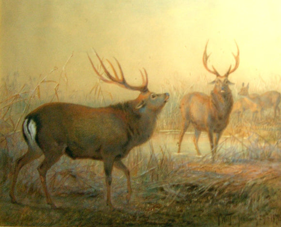 Joseph Wolf (German, 1820-1899) Two Elk