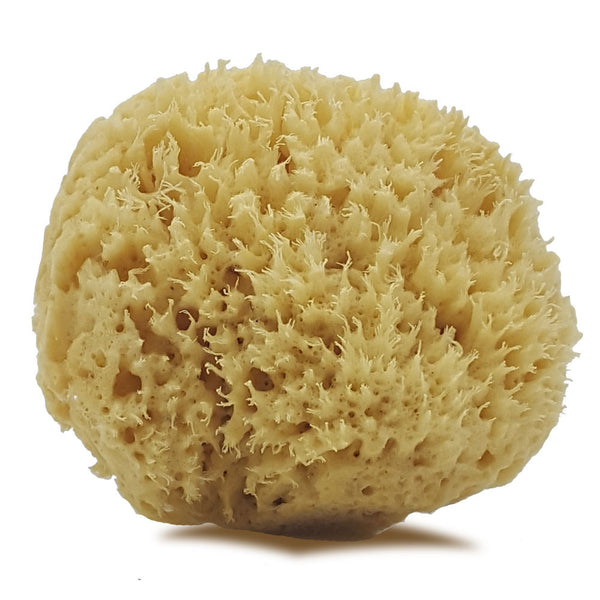 Bahamian Luxury Sea-Wool Bathing Sponge