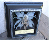 mummified fairy in vintage shadow box
