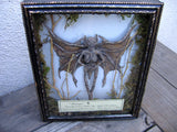 mummified fairy in shodow box